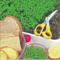 Cress Common - Pack of 50 seeds