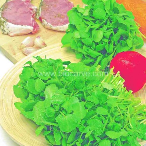 Watercress - Pack of 50 seeds