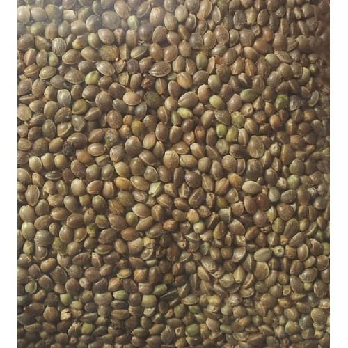 Organically Grown HEMP Seeds 200g
