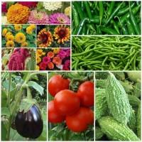 Biocarve Perfect kitchen Garden - 10 Packets