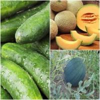 Biocarve Summer Vegetable Kit 3 - 3 Pkts