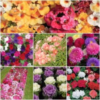 Biocarve High Impact Bedding Winter Flowers-7 Packets