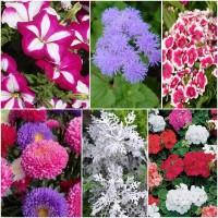 Biocarve Pot Plants Winter Flowers-6 Packets