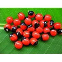 Abrus Precatorius Red , Jequirity - 100 Seeds