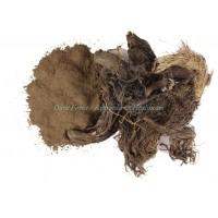 Dark Forest Jatamasi(Spikenard) Powder - 200g
